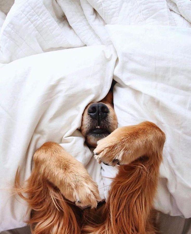 Картинки животные с добрым утром