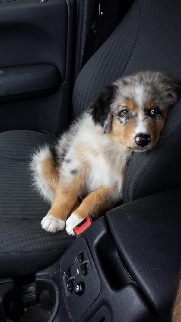But I wanna drive...Pleassseee... #HappyAlert via @Ashley Yoon Hippo Billy