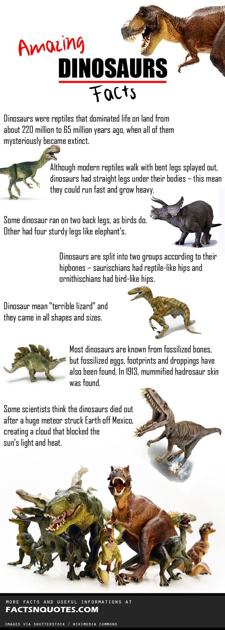Amazing Dinosaurs Facts You Should Know