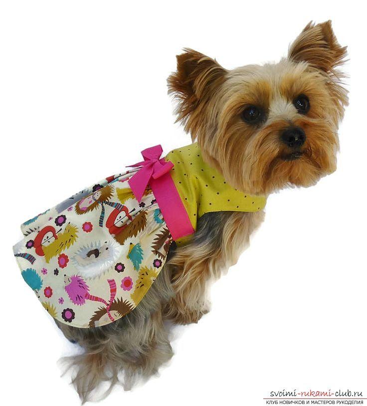 вершине одежда для собак маленьких пород картинки классики такой подход