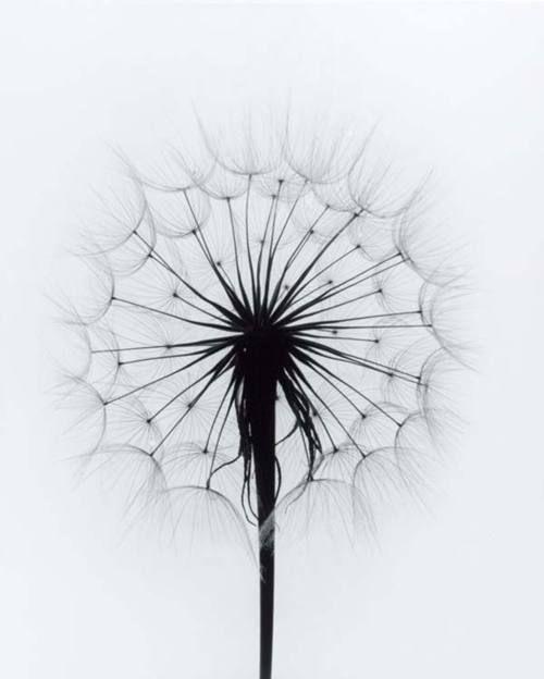Paul Caponigro – Flowers |