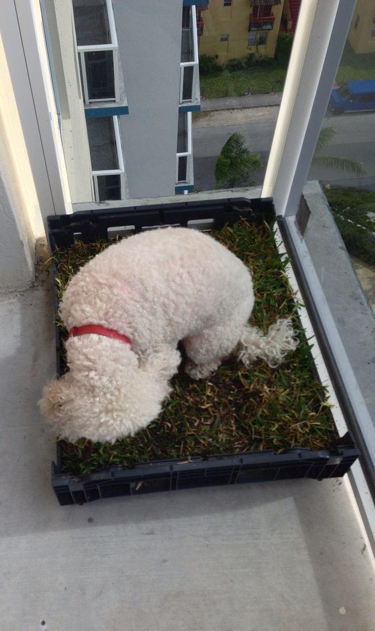 best 25+ apartment dog ideas on pinterest | dog hacks, diy dog
