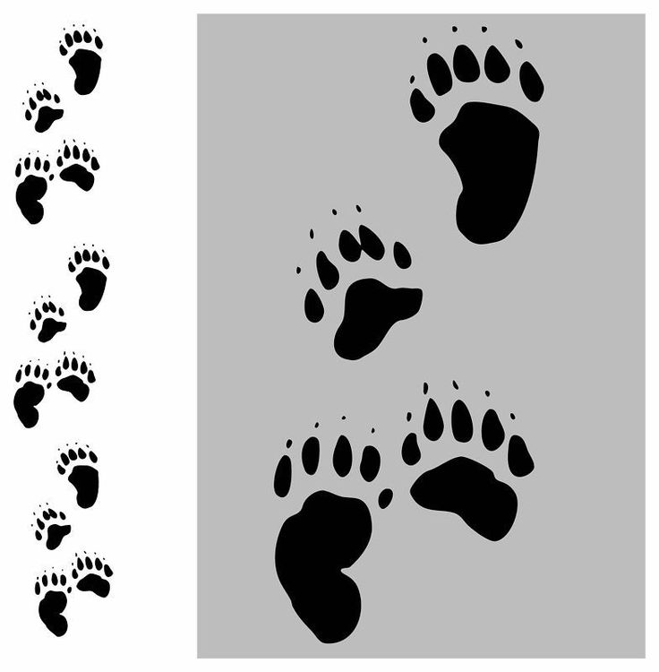 12 bear tracks paw prints wall sticker decal hunting for Bear footprints template