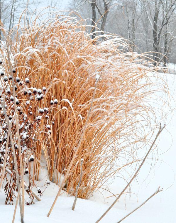 A Winter Garden Walk - The Creekside Cook