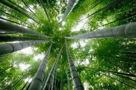 """After planting one seed, it takes 5 years of specific nurture and care before a Chinese Bamboo Tree even breaks through the earth. Once it does, it grows 90 feet in six weeks. Life is much akin to the growing process of the Chinese bamboo tree.  With patience, perseverance, and drive - we will see the overwhelming results over time."""" #thericciteam #riccihomes #dreambig"""