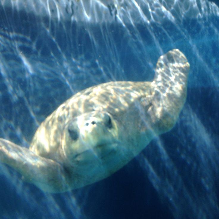 Aquário subterrâneo - Tartaruga Cabeçuda