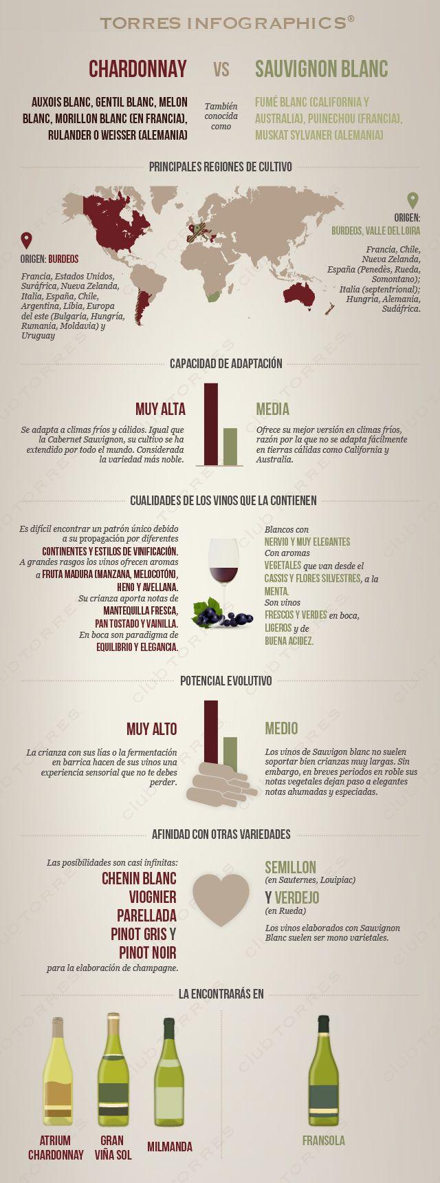 #Infografía: Chardonnay Vs Sauvignon blanc. #Vino