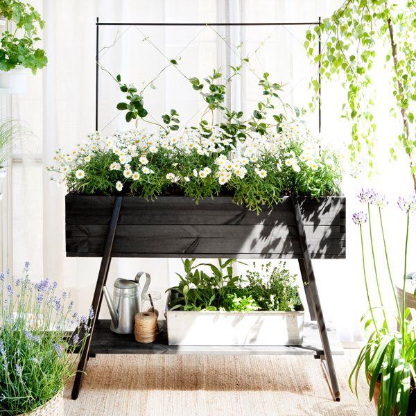 Kekkilän jalallisen viljelylaatikon avulla perustat helposti pienen puutarhan parvekkeelle tai terassille. Koottavassa kokonaisuudessa on mukana jalallinen viljelylaatikko, köynnöstuki, tarvikehylly ja kolme viljelytikkua.
