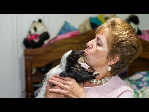 Skunk Admirers Celebrate Their Unique Pets In The Annual Skunk Festival
