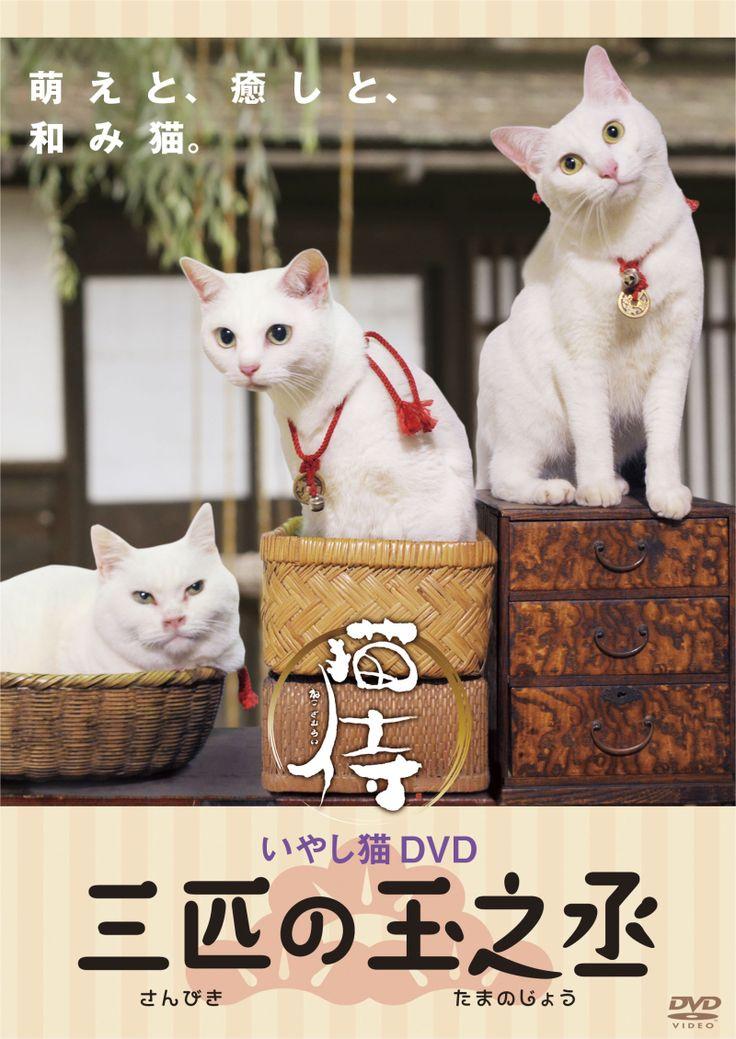 1月22日(水) 「いやし猫DVD 猫侍 三匹の玉之丞」先行予約開始!|映画とドラマ「猫侍」オフィシャルブログ