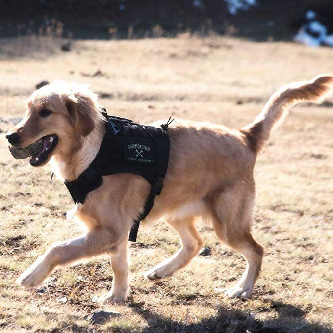 Amazon Com Onetigris Tactical Service Dog Vest Water Resistant