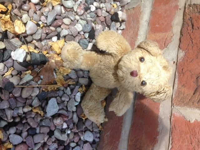 Found on 17/07/2015 @ Primrose Hill, Delamere Forest, Cheshire. Well loved little brown teddy bear found in car park primrose hill. Visit: https://whiteboomerang.com/lostteddy/msg/qlm08w (Posted by Megan on 17/07/2015)