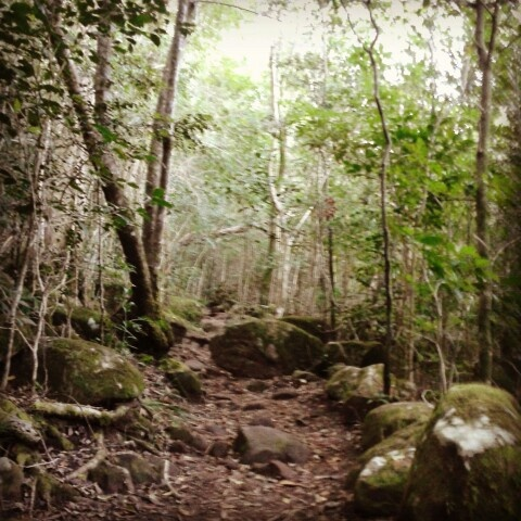Newlands forest Cape Town
