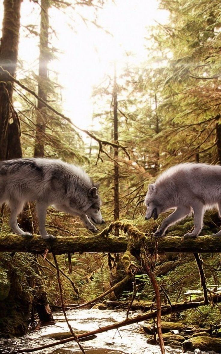 tronco, alberi, bosco, muschio iPhone 6 sfondi sfondo 750x1334 Sfondi gratis, immagini, foto, fondo, materiale