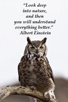 Like and share!    Love Owl Stuff? Visit us: mrowlie.com    #owl #owlnecklaces…