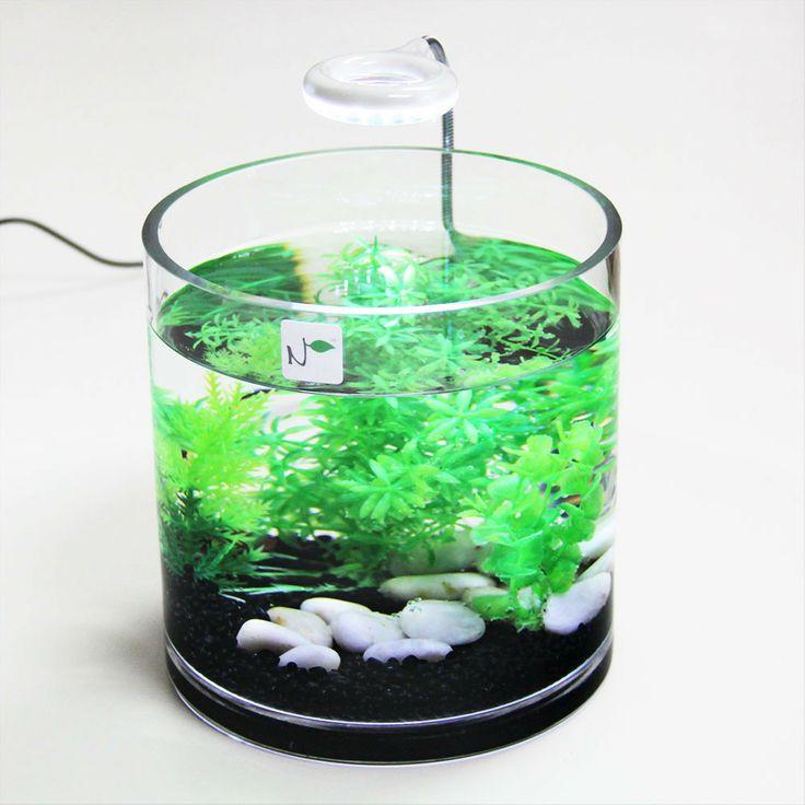 149 best images about tiny aquariums on pinterest cubes vivarium and shrimp - Petit aquarium design ...