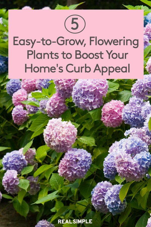 5 Easy Garden Plants