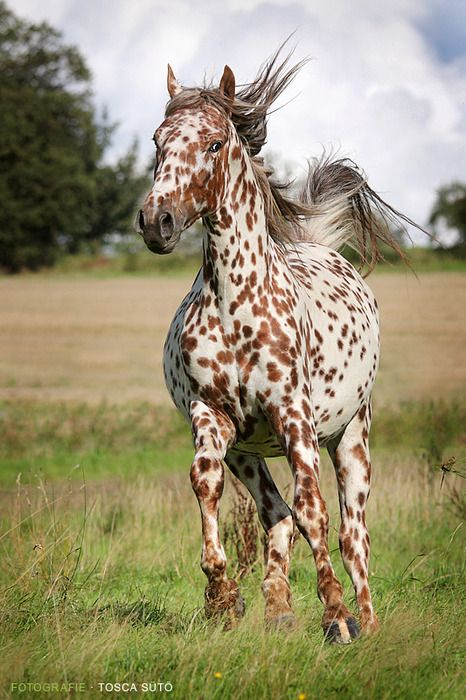 colorful animals | spotted horse