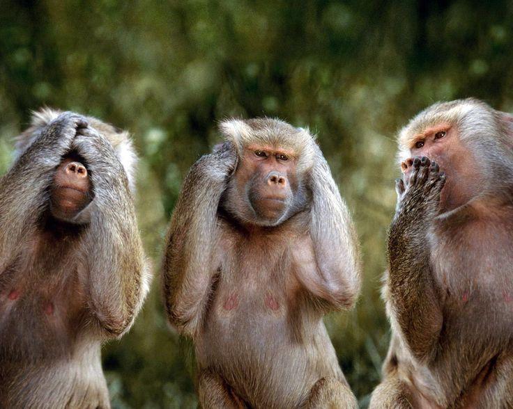 Funny Wallpapers | Immagini, Foto, immagini scimmia sul desktop e Immagini wallpapers ...