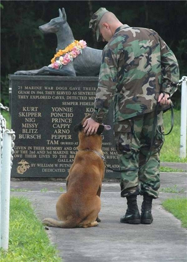 Army dog ~ Our K-9's work as hard as their handlers do. They need to be cared for and remembered as well.