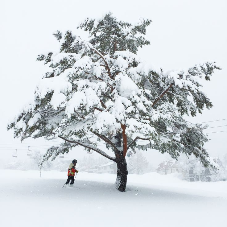 Cat trails, deep powder, first tracks, onsen and hanabi (Japanese fire crackers)... a children's paradise in the snow - Niseko, Japan