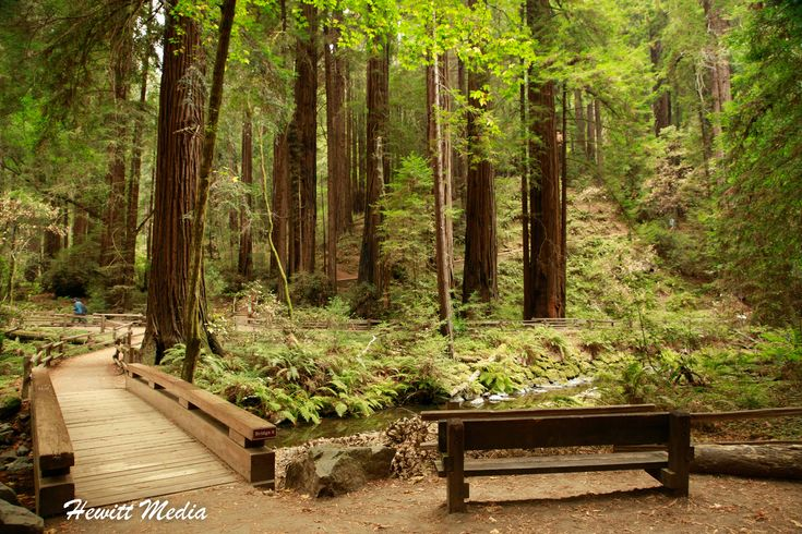 National Monuments – Muir Woods National Monument and San Francisco Guide https://wanderlustphotosblog.com/2018/02/19/national-monuments-muir-woods-national-monument-and-san-francisco-guide/?utm_campaign=crowdfire&utm_content=crowdfire&utm_medium=social&utm_source=pinterest