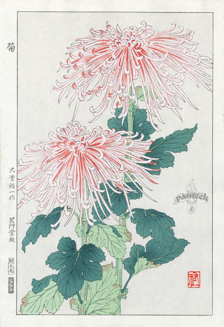 Tattoo idea but purple flowers ,  Shin Hanga Woodblock Botanical Prints 1939-1970's  Crysanthemum-Osuga Yuichi