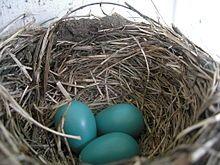 Turquoise - Wikipedia, the free encyclopedia Robin's eggs