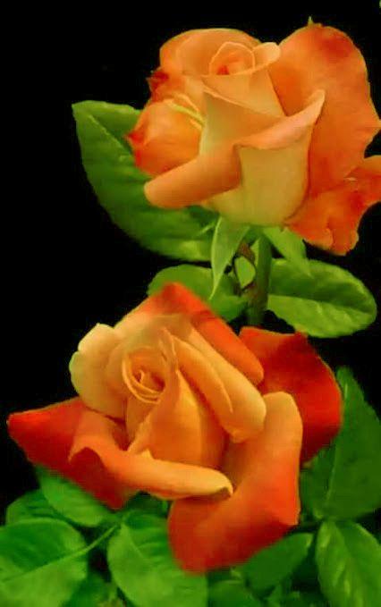 Para Rosita mi amantisima hermana11/11/16 que esta en el cielo.