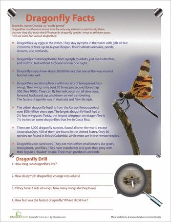 A 17 legjobb ötlet a következőről: Dragonfly Facts a Pinteresten
