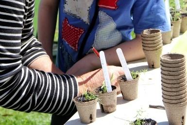 Image of Sustainable Living Festival – Backyard Biodiversity