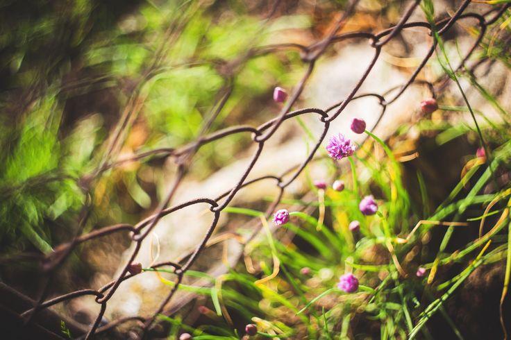 nature-flowers-summer-purple.jpg (5472×3648)