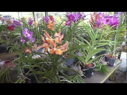 Pearl Orchids - YouTube