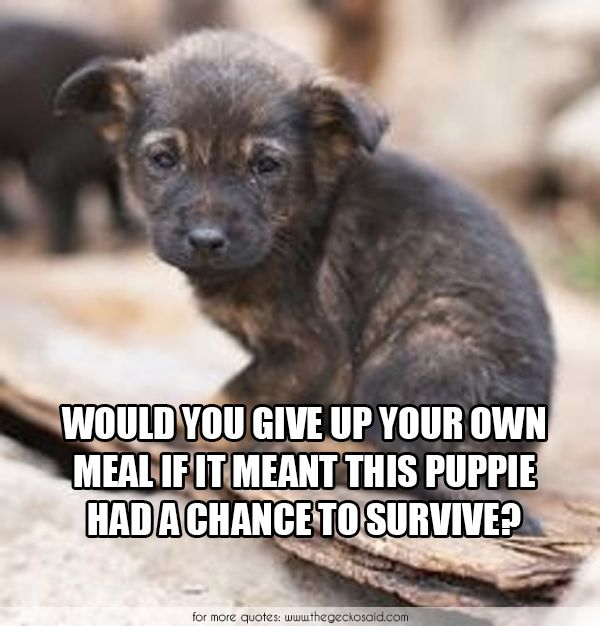 Would you give up your own meal if it meant this puppie had a chance to survive?  #animalabuse #animalrights #chance #doggie #give #meal #meant #own #puppie #quotes #survive