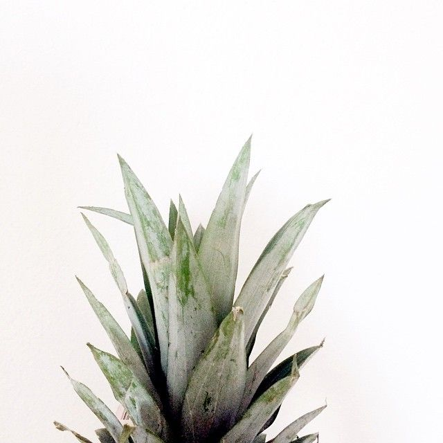 Planting Pineapples + http://kateamelia.co/journal/pineapple-plant