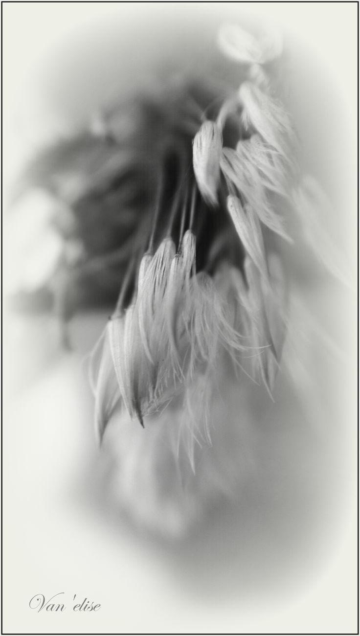Fotó:Vancsai Erzsébet (Van'elise) A Tél álmaiban