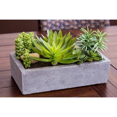 Planta suculenta de Langley Street Floor em plantador de concreto   – areglos de suculentas y otros