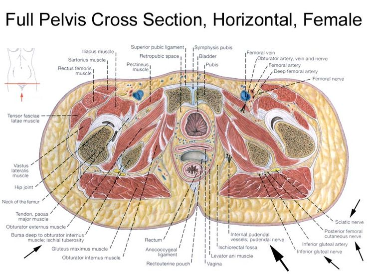 femoral artery vein and nerve relationship marketing