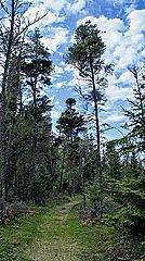Elk Island Provincial Park, Victoria Beach, Lake Winnipeg, Manitoba, Canada, North America