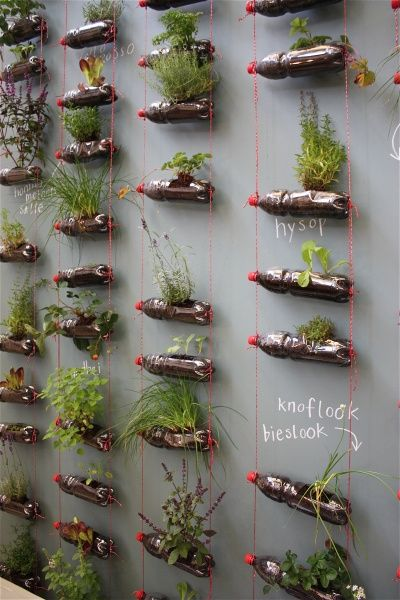 way to grow herbs in almost no space. (how to keep them from dying though...?)