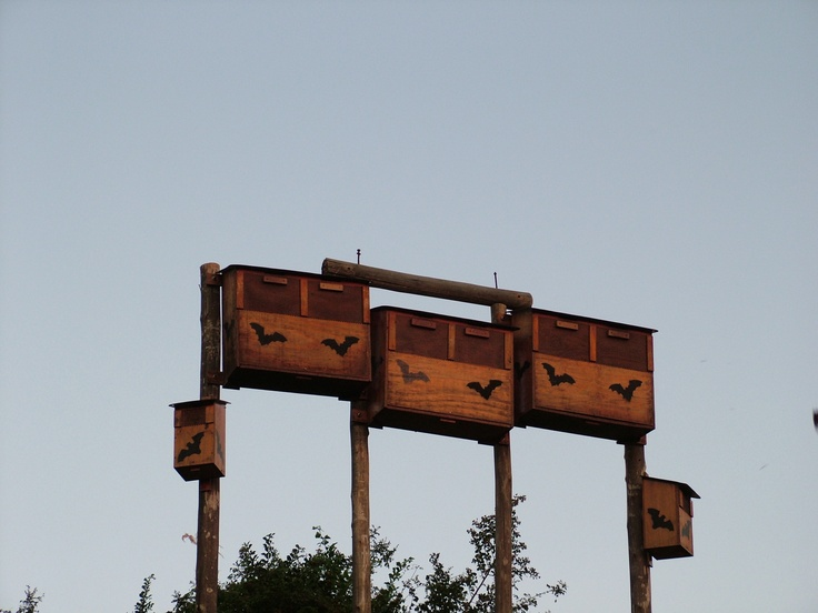 Bat boxes at Ngwenya Lodge in Mpumualanga