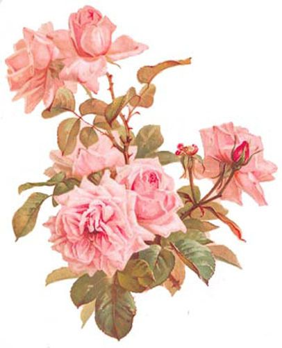 STuNninG-PinK-AnTiQue-RoSeS-ShaBby-WaTerSLiDe-DeCALs
