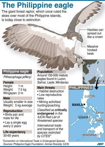 The 10 Biggest Eagle in the World.. | Message Board