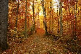 Prendre une marche dans le Parc de la Gatineau