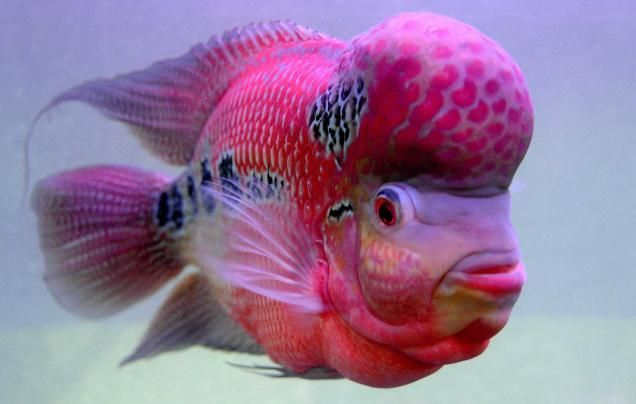 17 best images about just plain cute on pinterest for Fish for pets