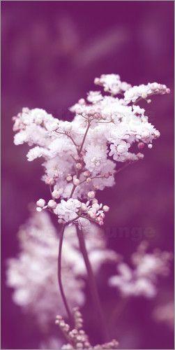 Christine Bässler - weiße Blüten