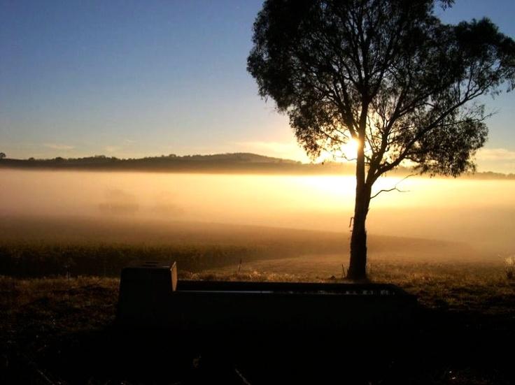 Patina Wines - Orange, NSW
