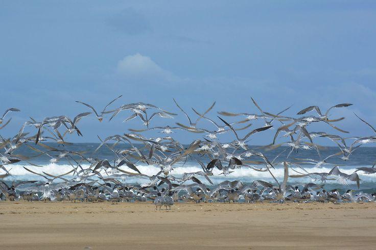 Beach landing.