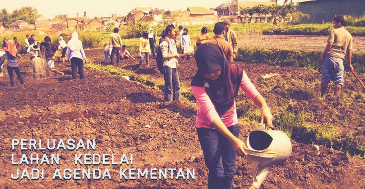 Perluasan Lahan Pertanian Kedelai Jadi Agenda Kementan
