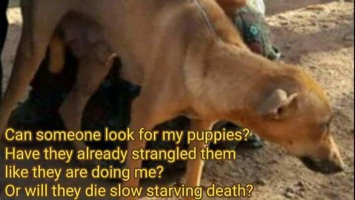 STOP THE INSANE CULLING OF DOGS IN KERALA, India > https://www.change.org/p/honorable-prime-minister-of-india-narendra-modi-stop-the-insane-culling-torture-and-killing-of-dogs-in-kerala